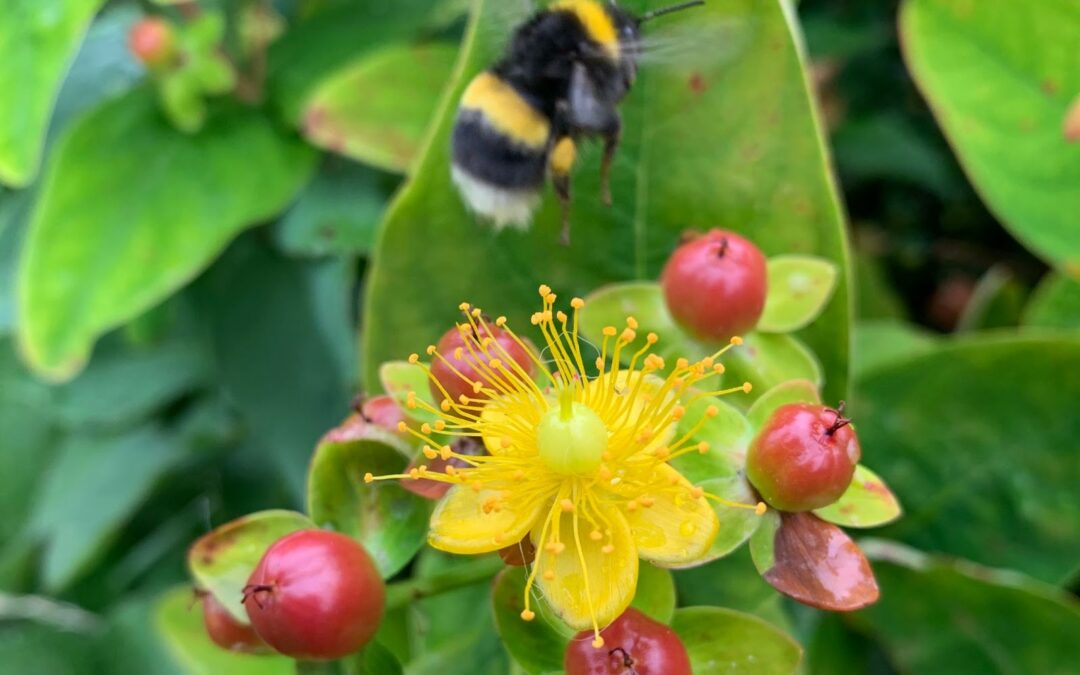 10 SEO tips for an eCard, Flowers or a Bee Website